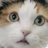 buzzcat_01102010