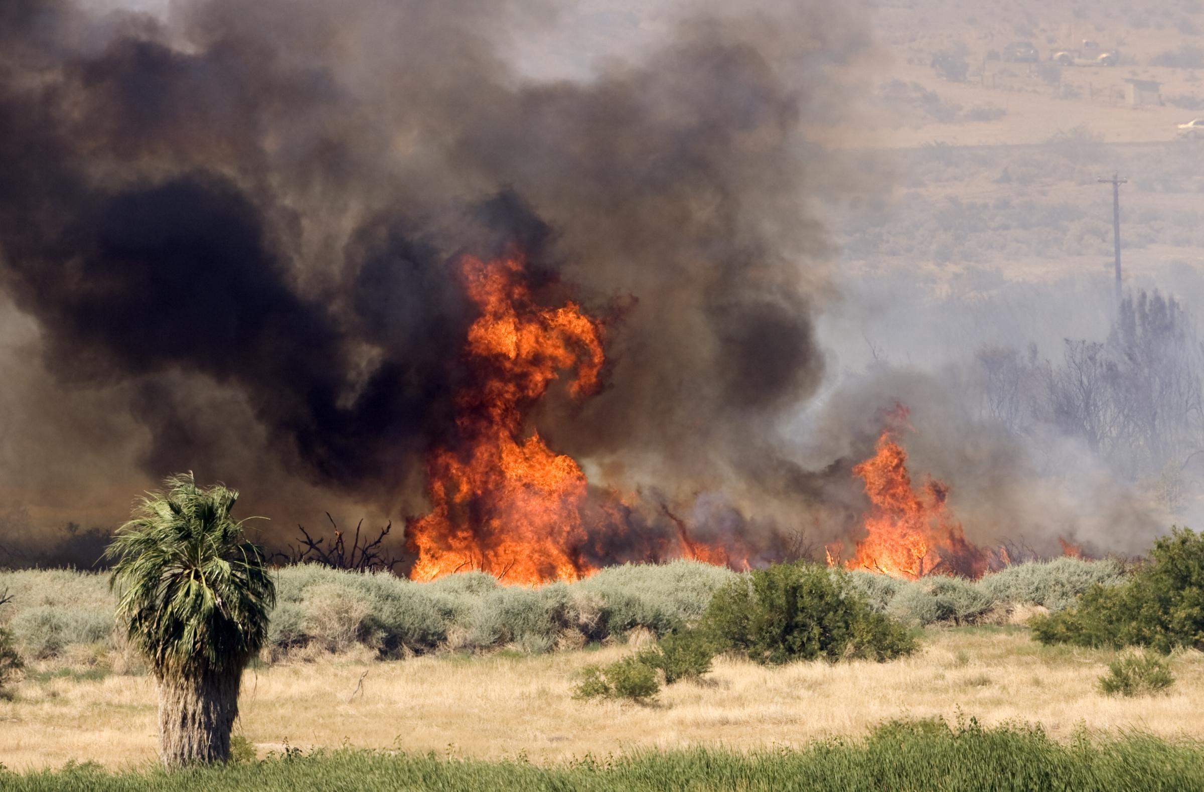 Wildfire Burns 600 Acres Near Moapa Las Vegas Review Journal