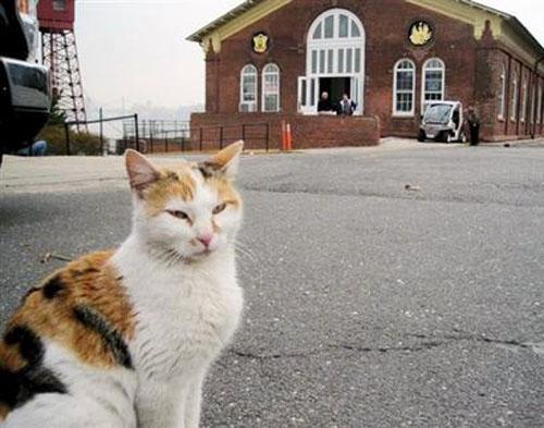 Saltwater Cat