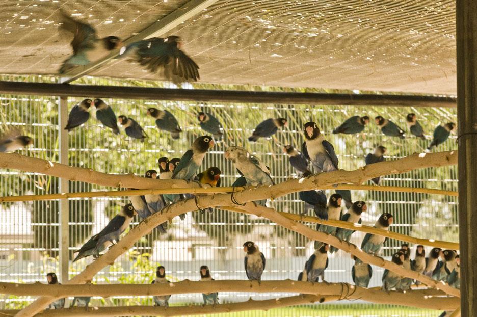 love birds 7 060911