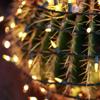 cactus)t