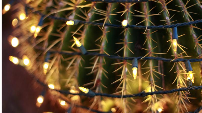 cactus_p