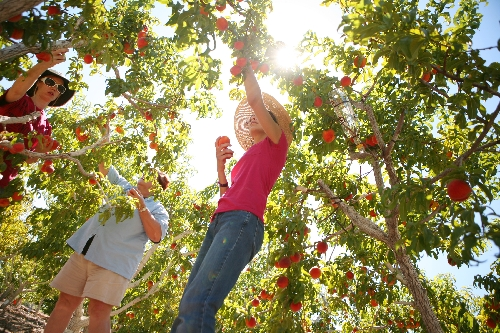 Orchard Inspires Gardeners To Eat What They Sow