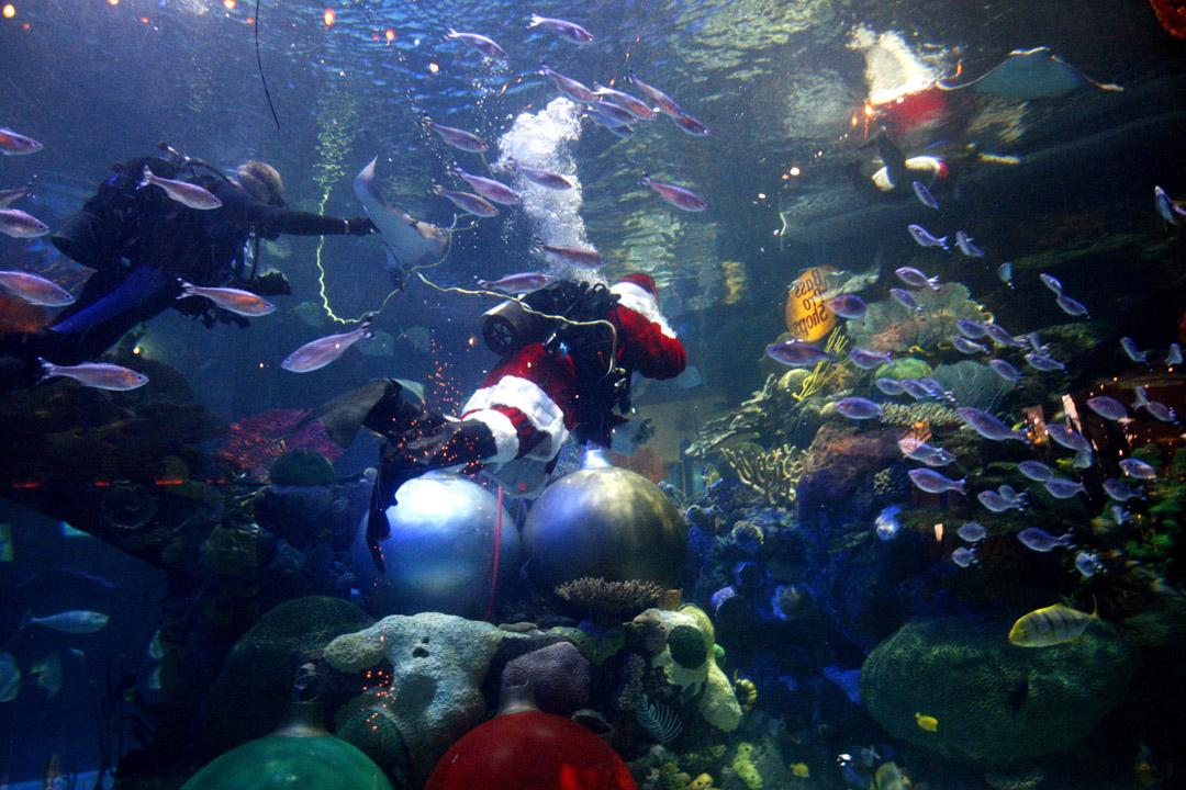 underwater_004