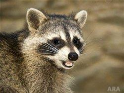 Think rabies is a thing of the past? Think again