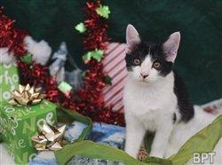 The holiday gift that keeps on giving: opt to adopt a pet, save a life