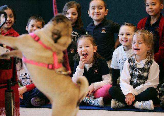 Faith Dolegowski, center, laughs along with her classmates at a certified therapy dog named Crackers during a visit to Merryhill School, 7605 W. Grand Teton Drive, Feb. 22. Claire DeJesus, a South ...