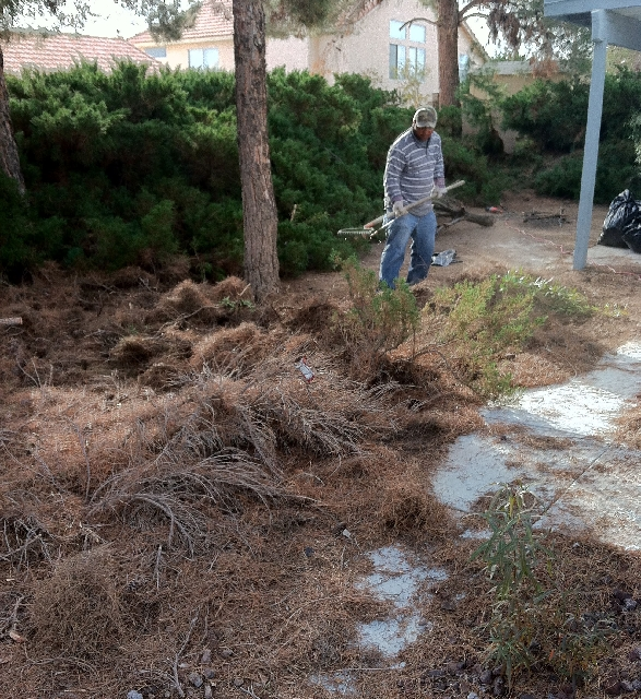 A worker helps clean out Rich Lively's overgrown Henderson backyard.