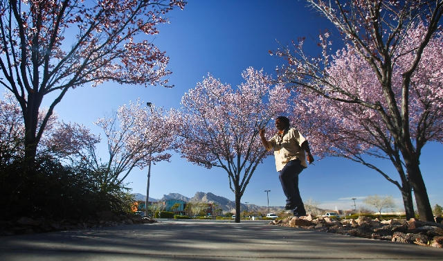Donald Stance walks past plum trees on North Town Center Drive in Summerlin on Tuesday. Las Vegas weather calls for low 70s today before cooling and a chance of rain on Friday and Saturday.