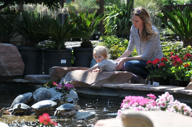 Olive Robles, 1, reaches for the sunbathing turtles while her mom, Jennelle Robles, holds her March 22 at Plant World, 5301 W. Charleston Blvd.