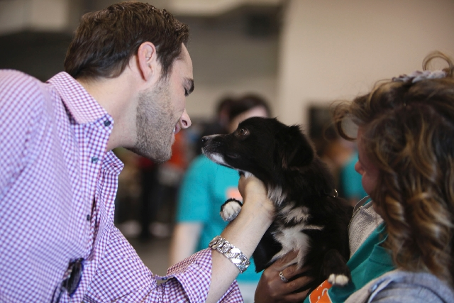 Josh Strickland pets Malcolm, a Pomeranian mix in the small dog category, at the Animal Foundation's 2011 Best in Show. The event is the foundation's biggest annual fundraiser. More th ...