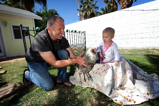 Steve Spann shows his daughter Maye, 1, one of the chickens he keeps in his downtown Las Vegas backyard.