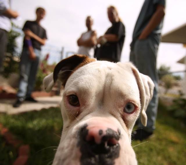 Spike, 2, an American bulldog, peers into the camera while the Avila family stands behind him Tuesday, talking about the fire that destroyed their mobile home.
