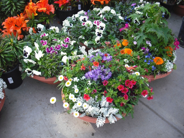 Add color to your yard with a variety of annual flowers, which can be planted in bowl-like containers such as these at Star Nursery.