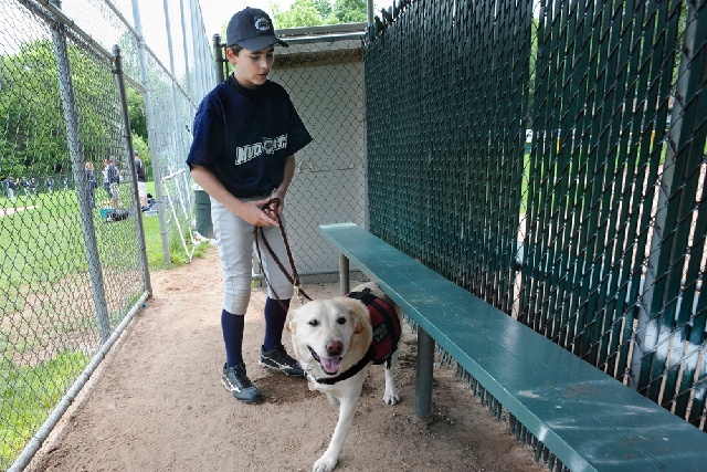Jeff Glazer guides his allergy-sniffing dog, Riley, through a dugout of a ball field before his team's baseball game in Middlebury, Conn. Parents are reporting more skin and food allergies in thei ...
