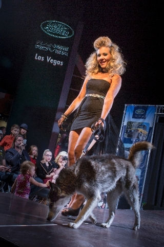A model walks down the runway accompanied by a dog ready to be adopted from The Animal Foundation during the Models for Mutts event at Land Rover Las Vegas.
