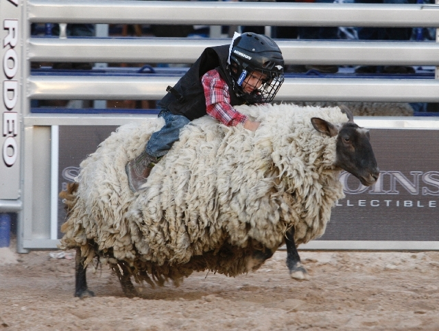 Rawlinz Porter competes in the Mutton Bustin' event at Las Vegas Helldorado Days 2010. This year's events, that run through Sunday, include a PRCA Pro Rodeo, Whiskerino Contest and Saturday's parade.