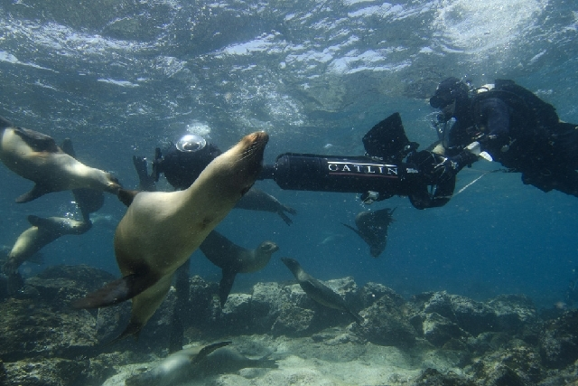 In this photo provided by Catlin Seaview Survey, Christophe Bailhache navigates an SVII camera through a large group of sea lions during a survey dive at Champion Island in Galapagos. Google Maps  ...