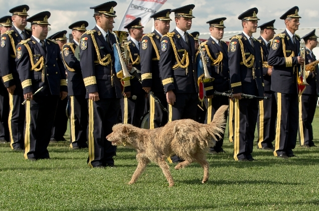 A stray dog passes by a military band during a Guinness World Record ceremony for the world's largest flag at the Clinceni Airfield, south of Bucharest, Romania on Monday.