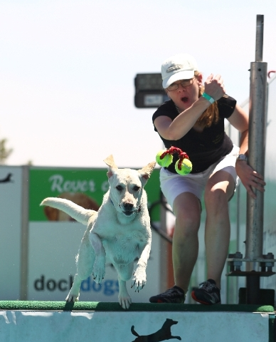 Owner Shannon Katt cheers on Lucy, a 4-year-old Labrador retriever, in the Big Air event.