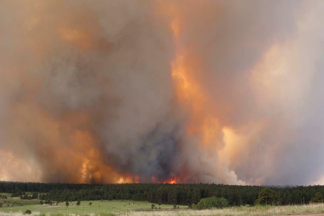 Fire crowns in the trees on a wildfire in the Black Forest area north of Colorado Springs, Colo., on Wednesday.  The number of houses destroyed by a wildfire near Colorado Springs could grow to ar ...