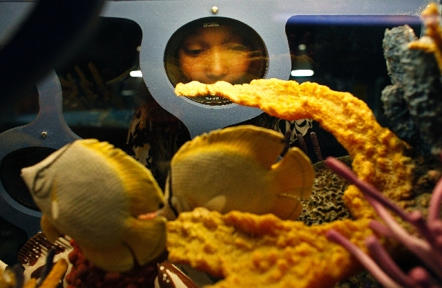 Cherish Ciesinski, 9, looks at the Discovery Reef exhibit, part of the Sea Trek traveling exhibit, at the Las Vegas Natural History Museum.