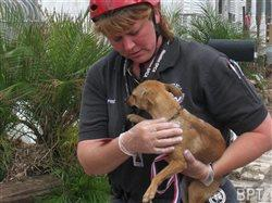 Planning can help families protect pets during natural disasters