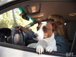 Driving with dogs: Tips to keep everyone in the car safe