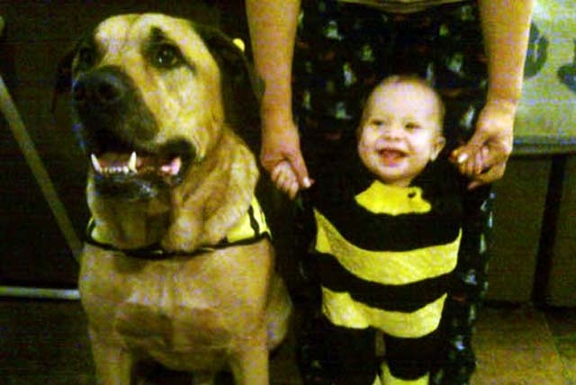 Jeremiah Eskew-Shahan is pictured with the family dog, Onion, in this undated family handout photo. The dog, a mastiff-Rhodesian mix that recently turned 6 years old, killed the boy after the boy' ...