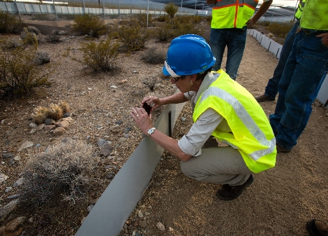 Interior Secretary Sally Jewell photographs a desert tortoise at California's Ivanpah Solar near Primm on Monday.