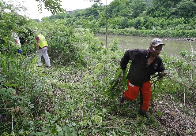 Duke Energy employee Mark Davis removes brush June 12 from along the Mill Creek in Cincinnati. Duke provided volunteers to help with the city's efforts to clean up the creek that runs through indu ...