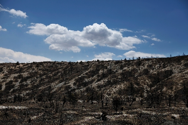 A hillside burned by Carpenter 1 Fire is seen in Kyle Canyon on Mount Charleston on Saturday.