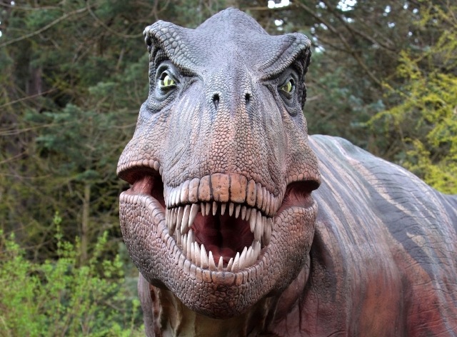 This Thursday, April 28, 2011 photo shows a Tyrannosaurus rex dinosaur replica at the Woodland Park Zoo in Seattle. Scientists have unearthed a dramatic remnant of an encounter between a Tyrannosa ...