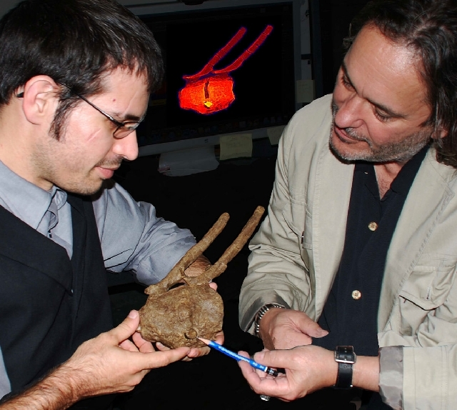 This photo via the National Academy of Sciences, researchers Robert A. DePalma II, left, and David A. Burnham show a Tyrannosaurus rex tooth crown embedded between the vertebrae of a hadrosaur and ...