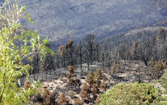 The forest behind Trout Canyon is shown on Tuesday, burned during the Carpenter 1 Fire.