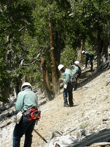 Young men from the Spring Mountain Youth Camp, a correctional facility on Mount Charleston, work outdoors as part of court mandated sentencing in this 2008 file photo. While the Carpenter 1 Fire b ...