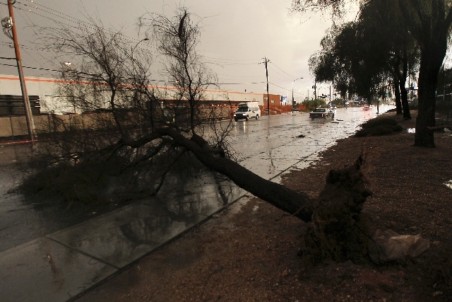 An uprooted tree lies across Bonanza Road near the intersection with Martin Luther King Jr. Boulevard as thunderstorms roll over the Las Vegas Valley on Friday.