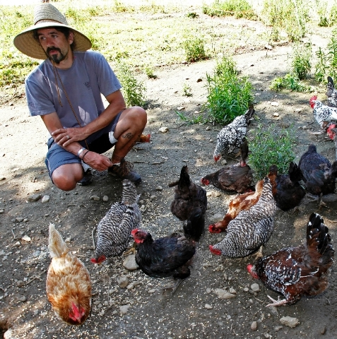 John Vitko feeds his chickens in Warren, Vt. Vitko would like to grow hemp to feed to his chickens.