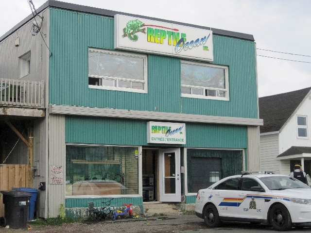 A Royal Canadian Mounted Police cruiser sits outside the Reptile Ocean exotic pet store in Campbellton, New Brunswick, Canada, on Tuesday. Autopsies will be performed Tuesday on two young boys who ...