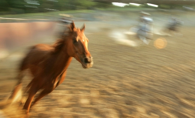 A horse gallops around a backyard 40-meter ring as Charros, or Mexican cowboys, give chase during practice for an upcoming Charreada, or Mexican rodeo, in Mabelvale, Ark. June 4, 2008.