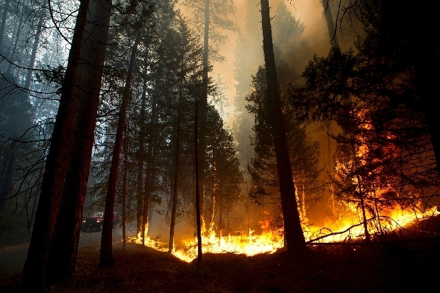 Fire rages out of control in the Stanislaus National Forest Thursday. A wildfire outside Yosemite National Park nearly quadrupled in size Thursday, prompting officers to warn residents in a gated  ...