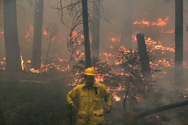 Television reporter Joe Fryer, foreground, walks away from the Rim Fire burning through trees near Yosemite National Park, Calif., on Tuesday, Aug. 27, 2013. Firefighters gained some ground Tuesda ...
