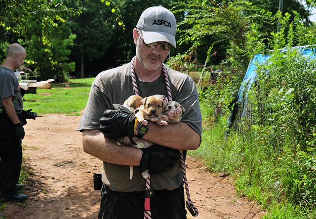 In this Aug. 23, 2013, photo provided by the ASPCA, puppies are carried by an official at a home in Auburn, Ala. A federal and state investigation into dog fighting and gambling has resulted in th ...