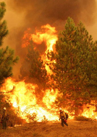 In this Friday, Aug. 30, 2013 photo provided by the U.S. Forest Service, a member of the Bureau of Land Management Silver State Hotshot crew from Elko, Nevada, stands by a burn operation on the so ...