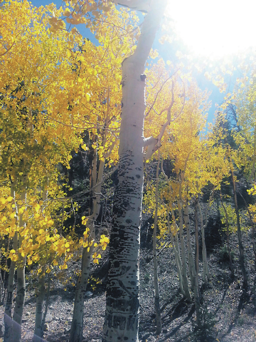 Susie Russell-Wagner of Summerlin submitted this photo of Lee Canyon on Sept. 21, 2013.