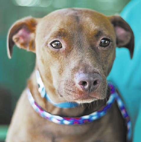 Gage The Animal Foundation I'm Gage (I.D. No. A736162), a 5-year-old neutered male dachshund. I love hugs. My short legs take me far, and in my dreams, when my new family goes on walks, I'm sc ...