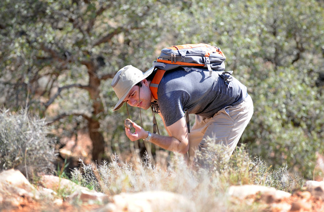 Andrew Rigney, geology student from UNLV examines a rock while surveying at Spring Mountain Ranch State Park on Saturday, Sept. 14, 2013. Rigney and several dozen students and volunteers surveyed  ...