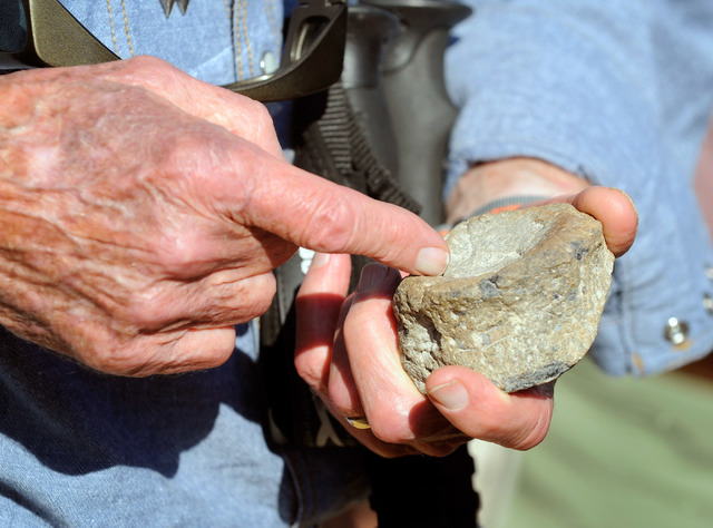 Harold Larson points to the fossil that he found earlier this summer at Spring Mountain Ranch State Park on Saturday, Sept. 14, 2013. Larson and several dozen UNLV students and volunteers surveyed ...