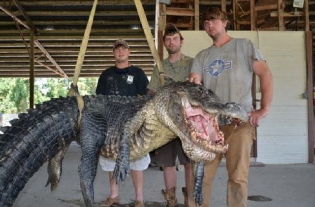 The hunting party of Dustin Bockman of Vicksburg, Miss., stand with their record-breaking alligator. It was 13 feet 4.5 inches and weighed 727 pounds. (Mississippi Department of Wildlife, Fisherie ...