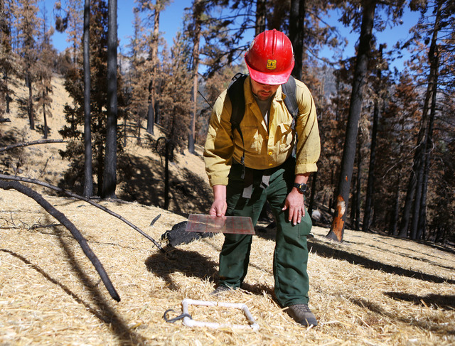 Matthew Gill, squad leader of Black Mountain Hotshots, demonstrates how he surveys forest floor samples for quality assurance at a unit of burned forest on the edge of the Rainbow Subdivision on M ...